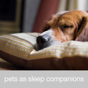 Pets as Sleep Companions